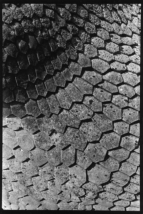 http://www.nikstrangelove.com/files/gimgs/th-48_iguanodon1.jpg