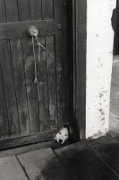 http://www.nikstrangelove.com/files/gimgs/th-15_Dog Door_v2.jpg