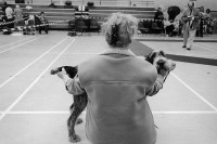 http://www.nikstrangelove.com/files/gimgs/th-20_dogshow.jpg