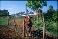 http://www.nikstrangelove.com/files/gimgs/th-52_Cow&Train_v2.jpg