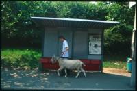 http://www.nikstrangelove.com/files/gimgs/th-52_Goat&BusStop_v2.jpg