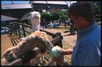 http://www.nikstrangelove.com/files/gimgs/th-52_GoatFeeding_v2.jpg
