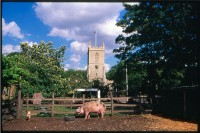 http://www.nikstrangelove.com/files/gimgs/th-52_Pig&Church_v2.jpg