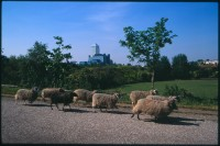 http://www.nikstrangelove.com/files/gimgs/th-52_Sheep&CanaryWharf_v2.jpg