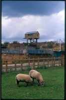 http://www.nikstrangelove.com/files/gimgs/th-52_Sheep&RailHut_v2.jpg